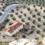Campo de olivos en Espana